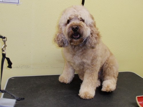 Before | Dog Grooming by County Line K9